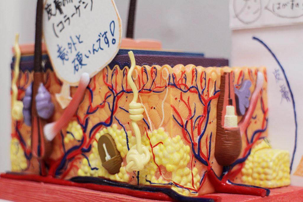 新中野の大木接骨院では筋膜の構造を研究しています