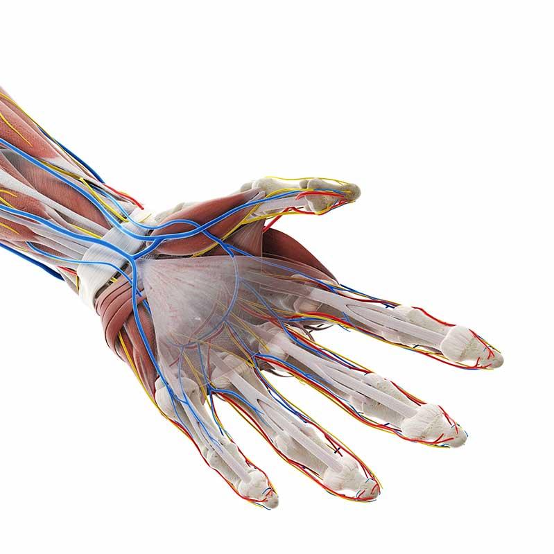 腕がしびれるのは神経の癒着が原因?