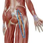 長時間座ると起こるお尻から太ももにかけての痛みやしびれ