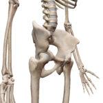 バスケやサッカーで起きる股関節の痛みとは??