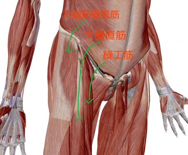 歩くと痛い股関節の痛み